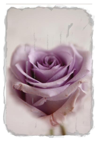 15_rose_heart