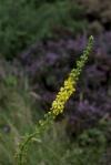 wild_flower_0110