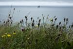 wild_flowers_0104