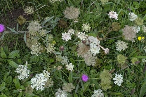 wildflowers_0109