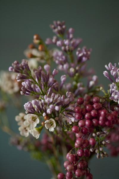 berries_0113
