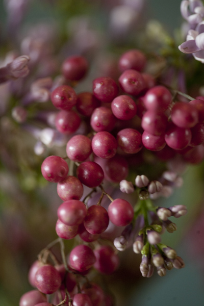 berries_0115