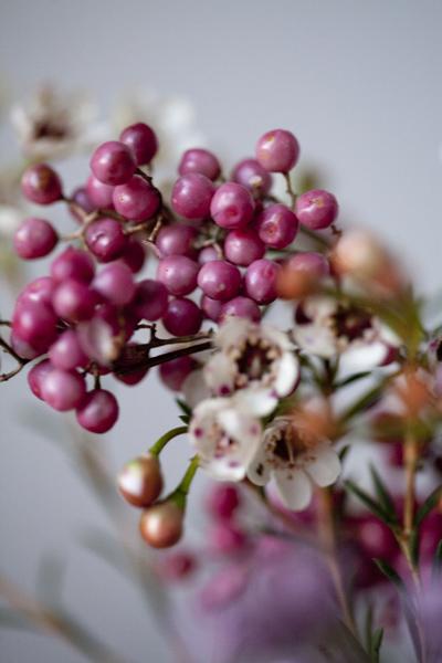 berries_0162