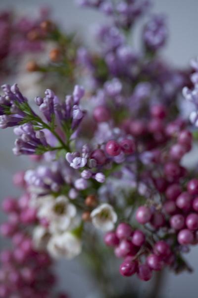 berries_0167