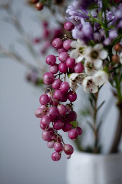 berries_0181