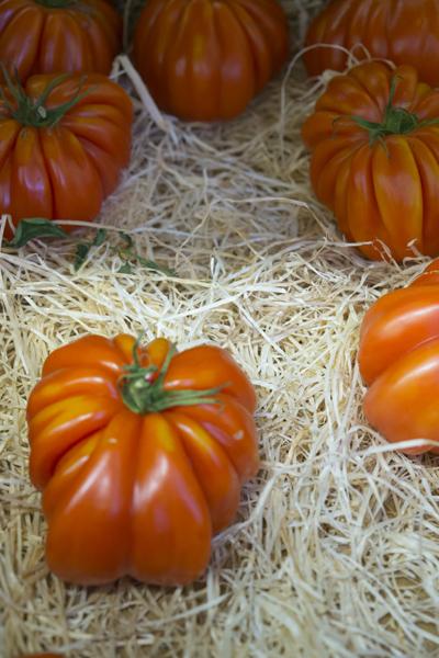 tomatoes_0036