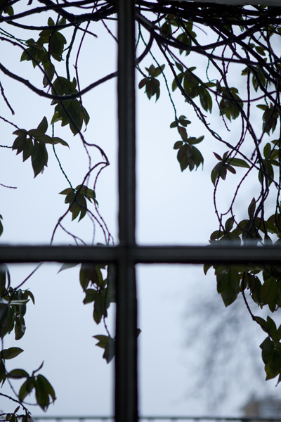 leaves_0028