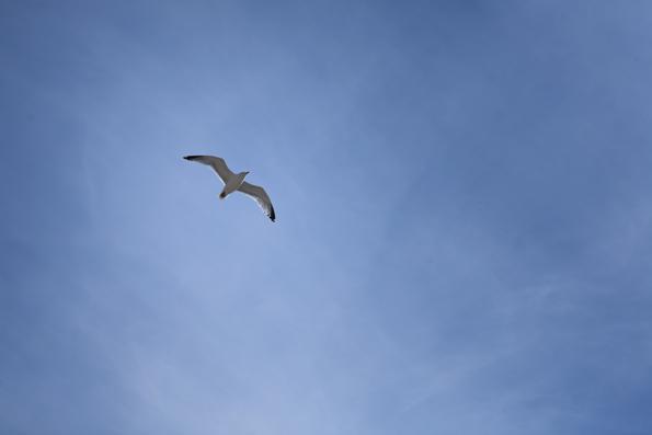 flying_0072 (1)