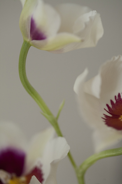 orchid_0013