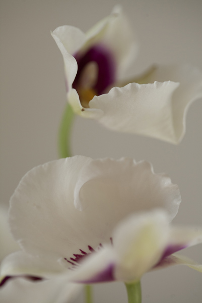orchid_0021