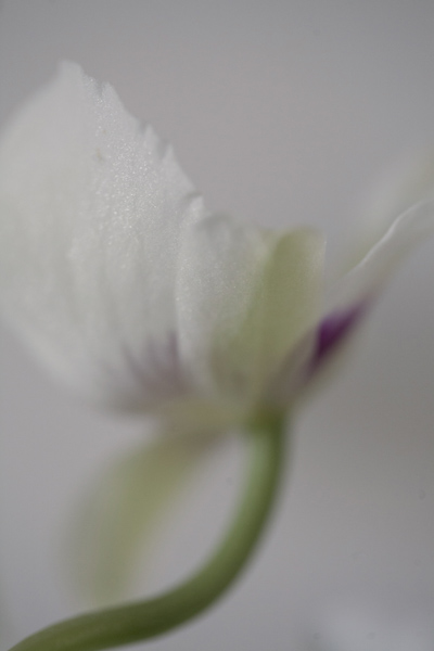 orchid_0045