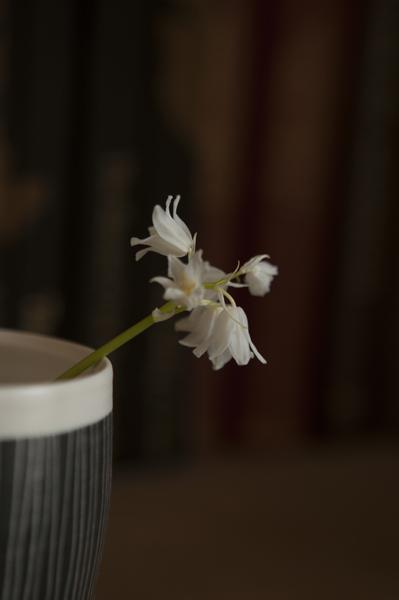 white flower12Apr2014_0017