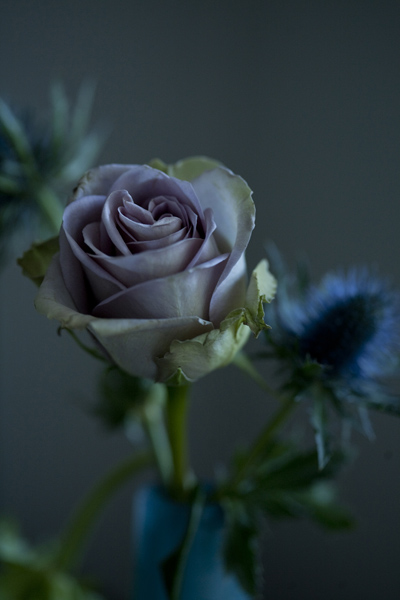 78_rose_thistle