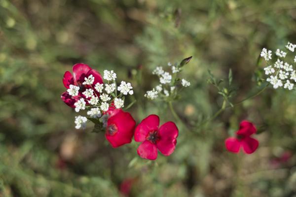 wild_flowers_0017