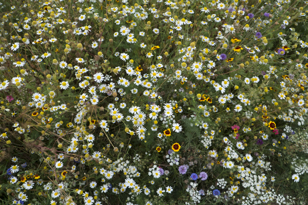wild_flowers_0079