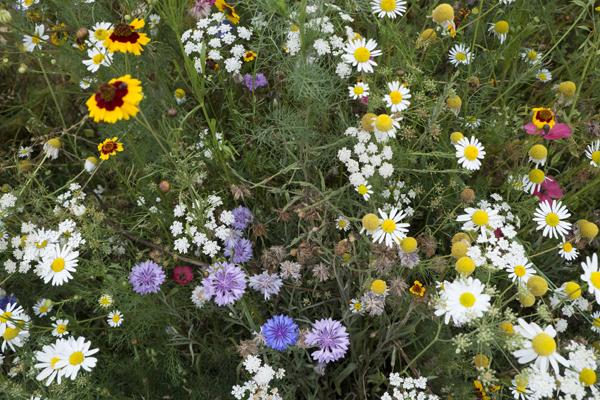 wild_flowers_0080