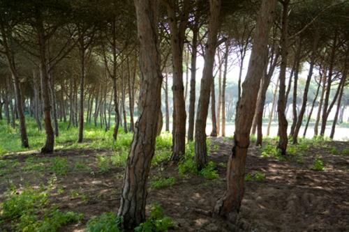 trees_7098