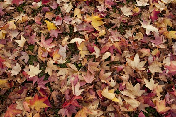 autumn_leaves_0075 (1)