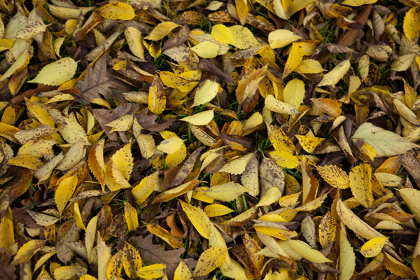 leaves_0121 (1)