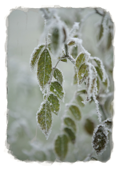 24_winter_leaves