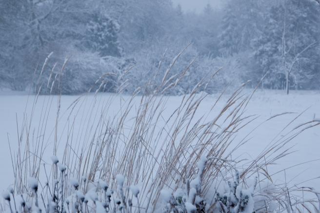 snow_0767