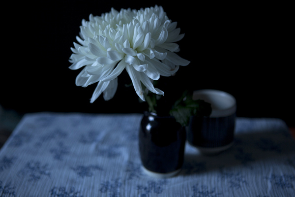 chrysanth30Nov2014_0139