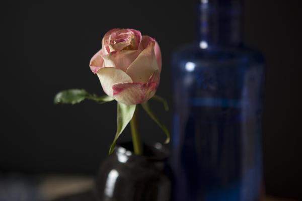 rose30Nov2014_0111