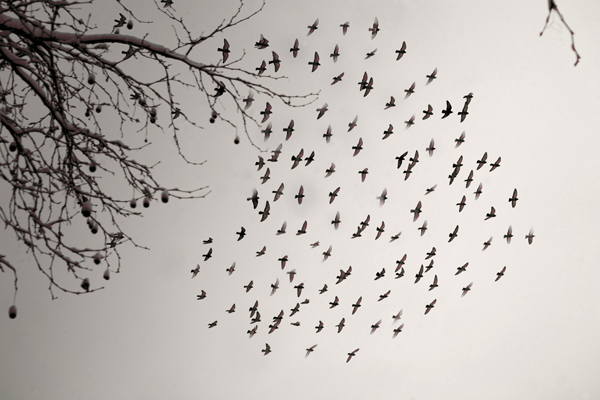 6_flying_birds_heart