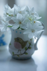 17Jan2011_0022