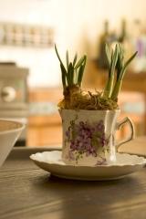 teacup close up