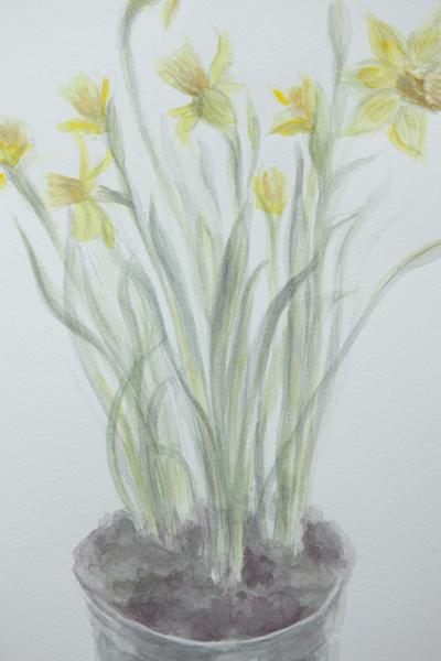 daffodil_0007