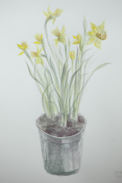 watercolour_daffodil_0006