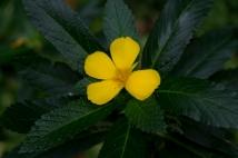 14Jul2015_flora_0398