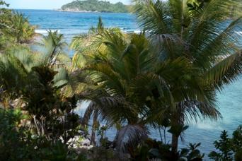 aligatorhead11Jul2015_jamaica_0049