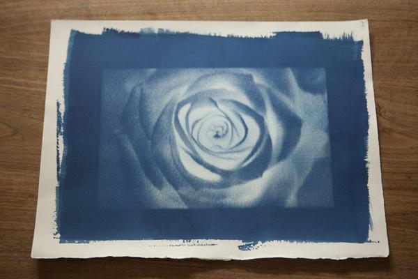 rose_0098