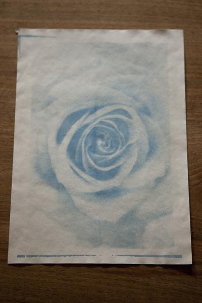 rose_0100