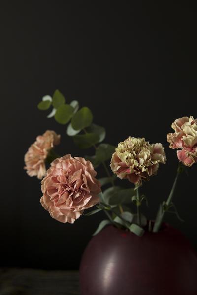 carnations18Sep2015_0021
