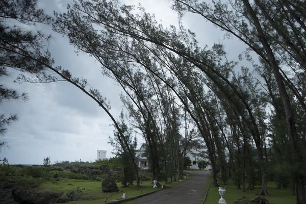 trees15Jul2015_jamaica_0438