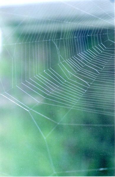 cobweb001 (1)