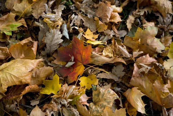 leaves_0230