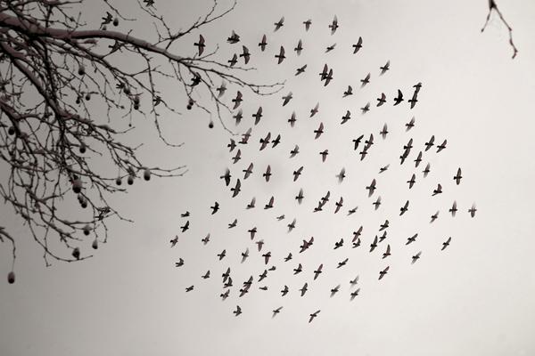6_flying_birds_heart