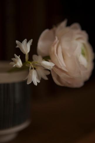 white_flower12Apr2014_0025