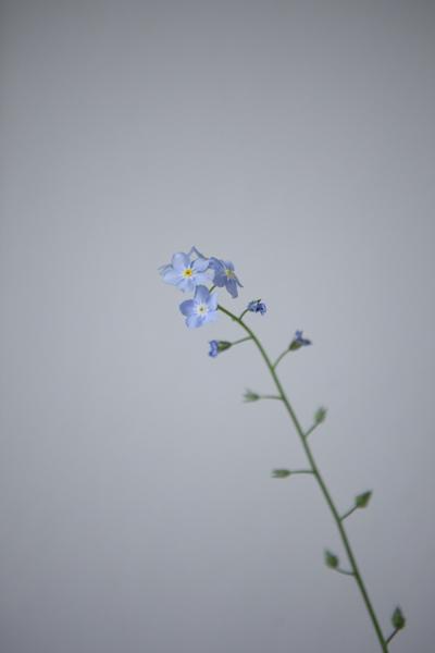 blueflower_0020