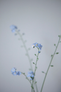 blueflower_0019