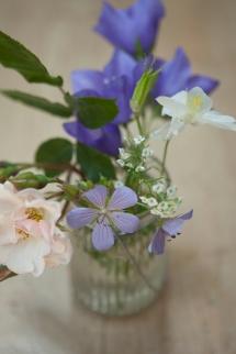 flowersgarden11Jun2015_0022