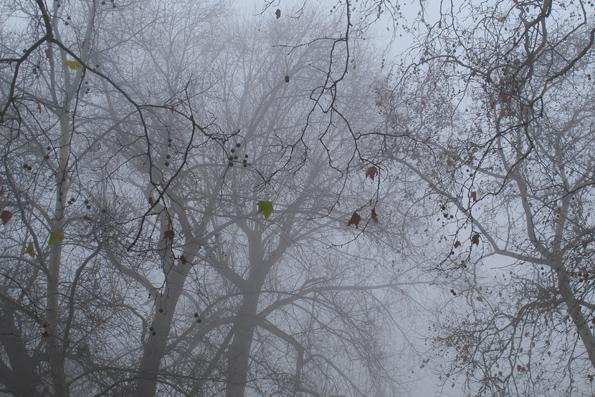 53_leaves