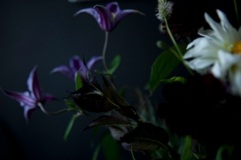 flowers22oct2016_0052