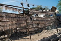 dried_fish12dec2016_0356