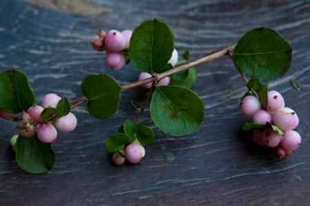 144_pink_berries