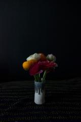 145_colourful _ranunculas